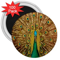 Peacock Bird Feathers 3  Magnets (100 Pack)