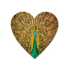 Peacock Bird Feathers Heart Magnet