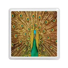 Peacock Bird Feathers Memory Card Reader (Square)