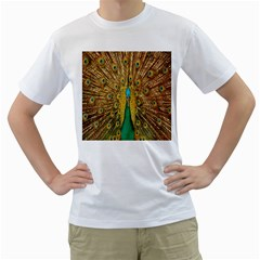 Peacock Bird Feathers Men s T-Shirt (White)