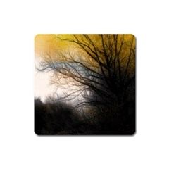 Tree Art Artistic Abstract Background Square Magnet