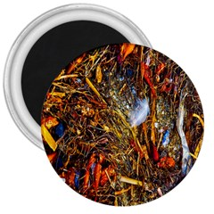 Abstract In Orange Sealife Background Abstract Of Ocean Beach Seaweed And Sand With A White Feather 3  Magnets