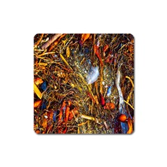Abstract In Orange Sealife Background Abstract Of Ocean Beach Seaweed And Sand With A White Feather Square Magnet