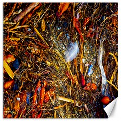 Abstract In Orange Sealife Background Abstract Of Ocean Beach Seaweed And Sand With A White Feather Canvas 20  X 20