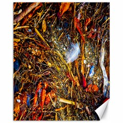 Abstract In Orange Sealife Background Abstract Of Ocean Beach Seaweed And Sand With A White Feather Canvas 11  x 14