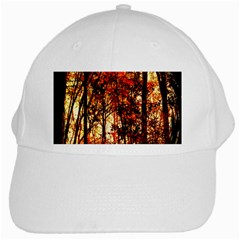 Forest Trees Abstract White Cap