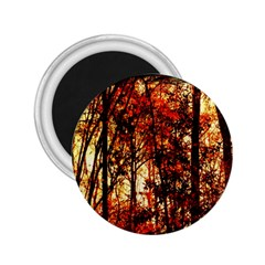 Forest Trees Abstract 2.25  Magnets