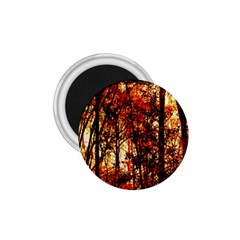Forest Trees Abstract 1 75  Magnets