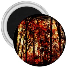 Forest Trees Abstract 3  Magnets