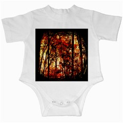 Forest Trees Abstract Infant Creepers