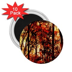 Forest Trees Abstract 2.25  Magnets (10 pack)