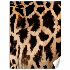 Yellow And Brown Spots On Giraffe Skin Texture Canvas 36  X 48