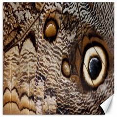Butterfly Wing Detail Canvas 20  X 20