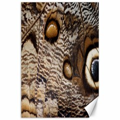 Butterfly Wing Detail Canvas 24  x 36