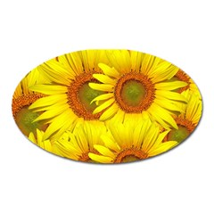 Sunflowers Background Wallpaper Pattern Oval Magnet
