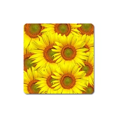 Sunflowers Background Wallpaper Pattern Square Magnet