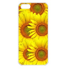 Sunflowers Background Wallpaper Pattern Apple iPhone 5 Seamless Case (White)