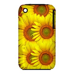 Sunflowers Background Wallpaper Pattern iPhone 3S/3GS