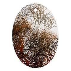 Digitally Painted Colourful Winter Branches Illustration Ornament (oval)