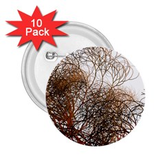 Digitally Painted Colourful Winter Branches Illustration 2.25  Buttons (10 pack)