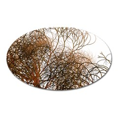 Digitally Painted Colourful Winter Branches Illustration Oval Magnet