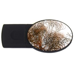 Digitally Painted Colourful Winter Branches Illustration USB Flash Drive Oval (2 GB)