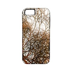 Digitally Painted Colourful Winter Branches Illustration Apple Iphone 5 Classic Hardshell Case (pc+silicone)
