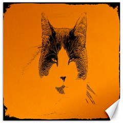 Cat Graphic Art Canvas 20  x 20
