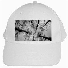 Trees Without Leaves White Cap