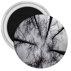 Trees Without Leaves 3  Magnets