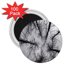 Trees Without Leaves 2 25  Magnets (100 Pack)
