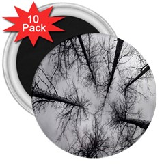 Trees Without Leaves 3  Magnets (10 Pack)