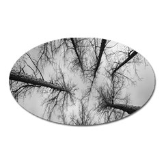 Trees Without Leaves Oval Magnet