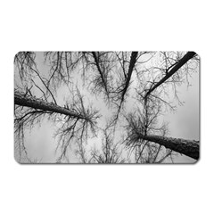 Trees Without Leaves Magnet (Rectangular)