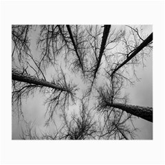 Trees Without Leaves Small Glasses Cloth