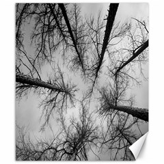 Trees Without Leaves Canvas 8  x 10