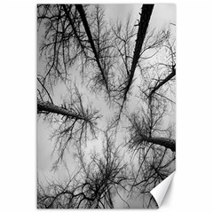 Trees Without Leaves Canvas 20  x 30