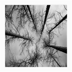 Trees Without Leaves Medium Glasses Cloth