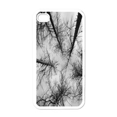 Trees Without Leaves Apple iPhone 4 Case (White)