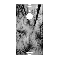 Trees Without Leaves Nokia Lumia 1520
