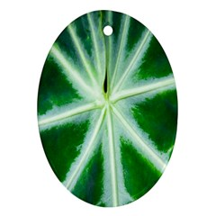 Green Leaf Macro Detail Ornament (Oval)