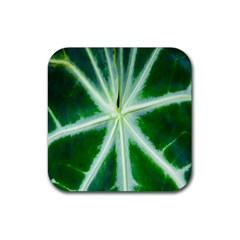 Green Leaf Macro Detail Rubber Square Coaster (4 Pack)