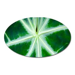 Green Leaf Macro Detail Oval Magnet
