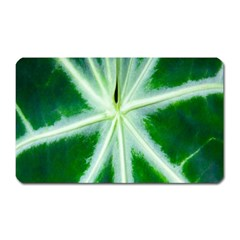 Green Leaf Macro Detail Magnet (Rectangular)