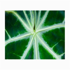 Green Leaf Macro Detail Small Glasses Cloth (2-Side)