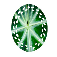 Green Leaf Macro Detail Oval Filigree Ornament (two Sides)