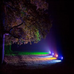 Illuminated Trees At Night Magic Photo Cubes