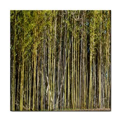 Bamboo Trees Background Tile Coasters
