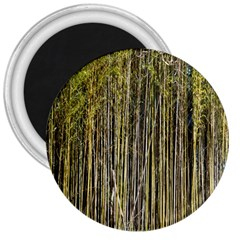 Bamboo Trees Background 3  Magnets