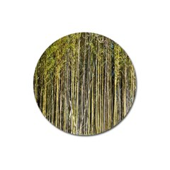 Bamboo Trees Background Magnet 3  (Round)